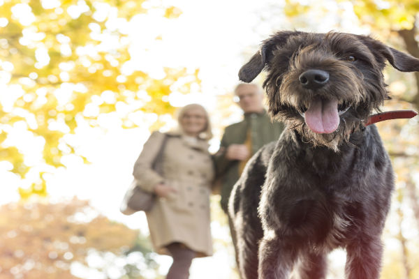 Dog being walked by owners in the Autumn