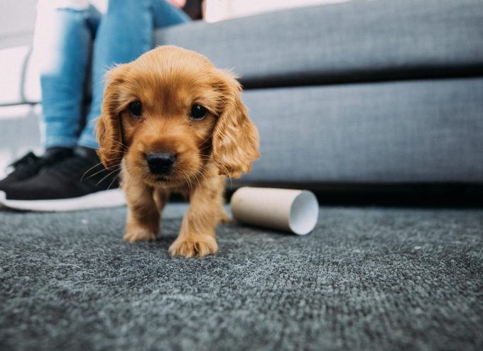 Preparing for a puppy or dog