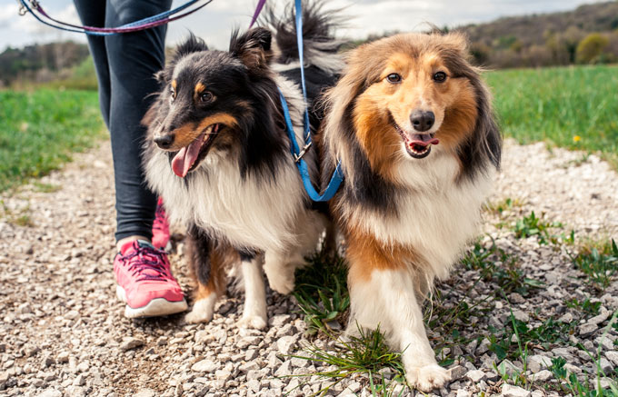 Dog trainers and behaviourists