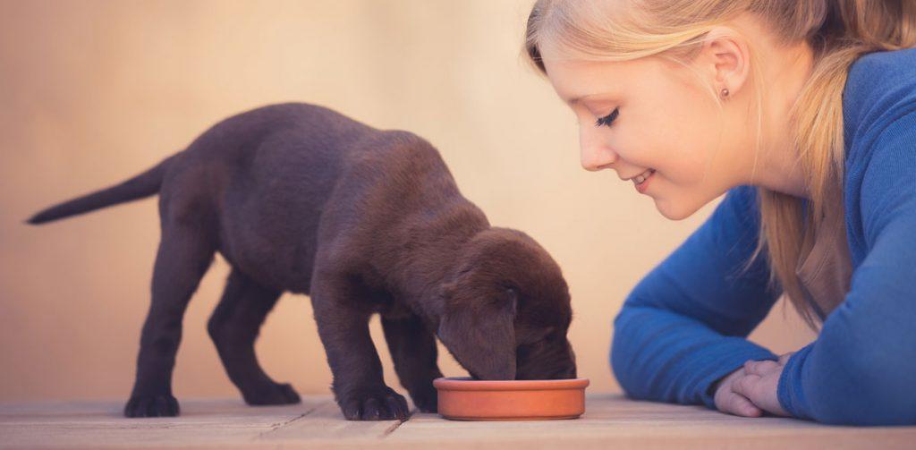 News: TV Vet Joe Inglis launches homemade dog food platform