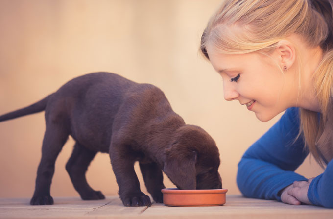 What to buy for a puppy or dog