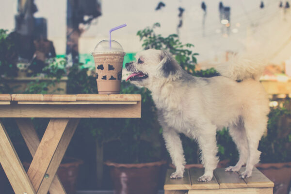 Dog-friendly UK – where dogs are welcome