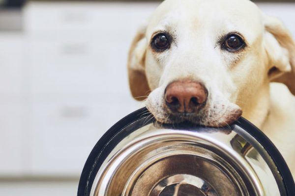 Is insect-based dog food the way forward