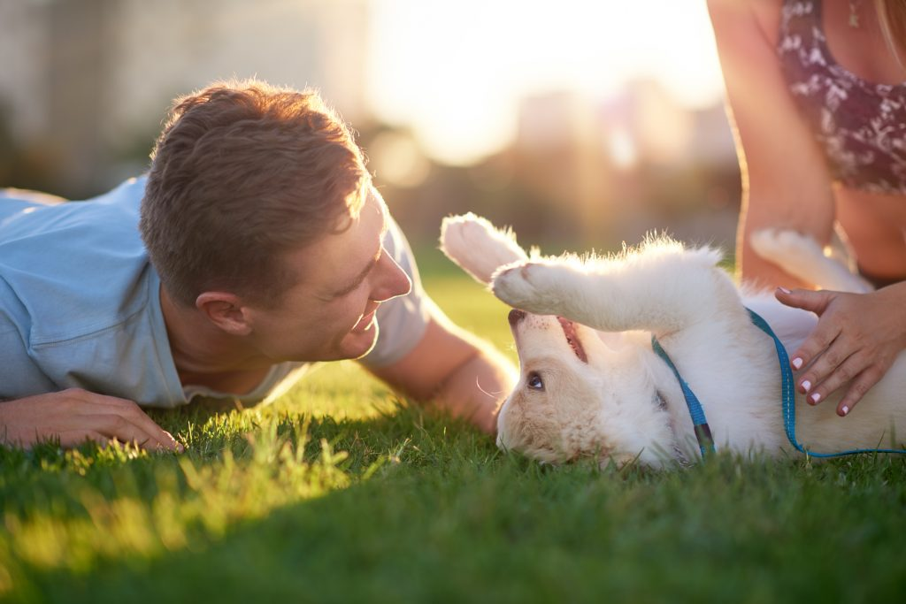 Take part in a dog owner research project