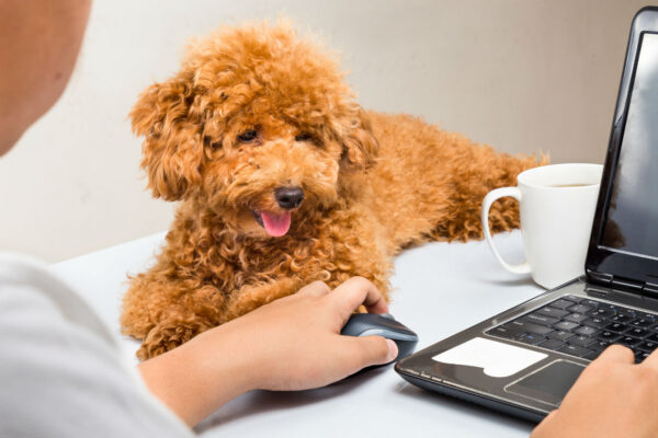 'I have a puppy, and I work full-time'