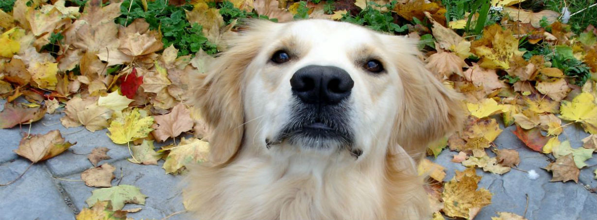 Help For My Fearful Dog What I Wish I D Known I Our
