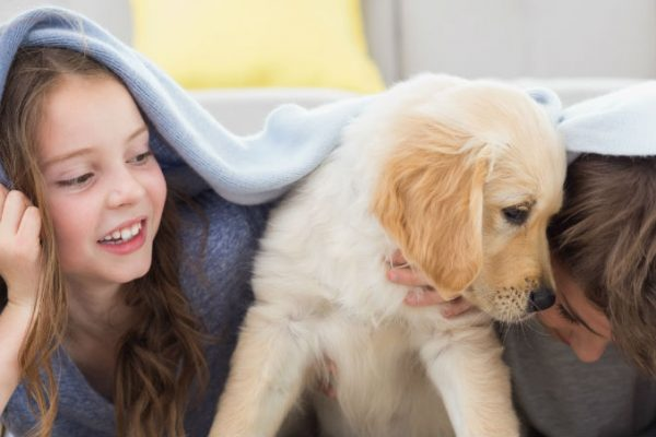 Tips for buying a puppy: avoid puppy scams