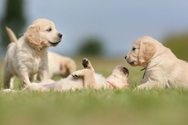 How to choose the right puppy