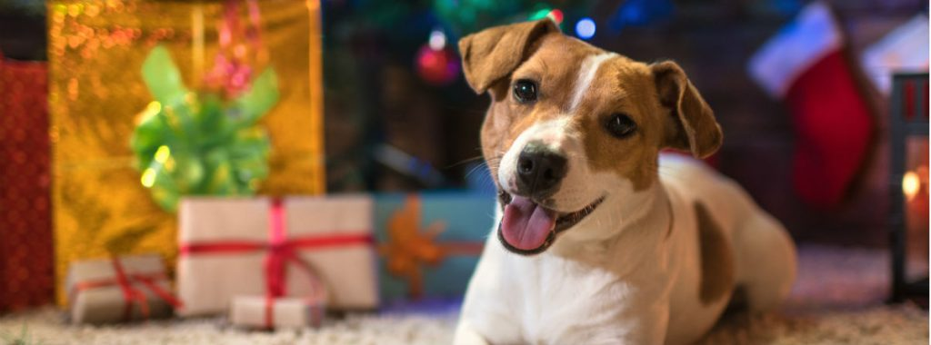 Christmas presents for dogs: last minute ideas