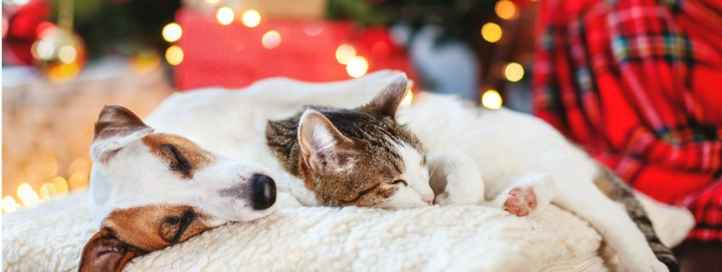 Dogs at Christmas: how to make sure your dog stays happy and safe