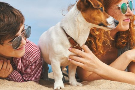 Travelling Abroad With A Dog