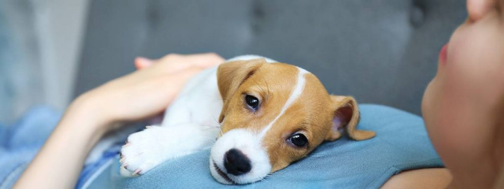 4 common new puppy problems you may be experiencing