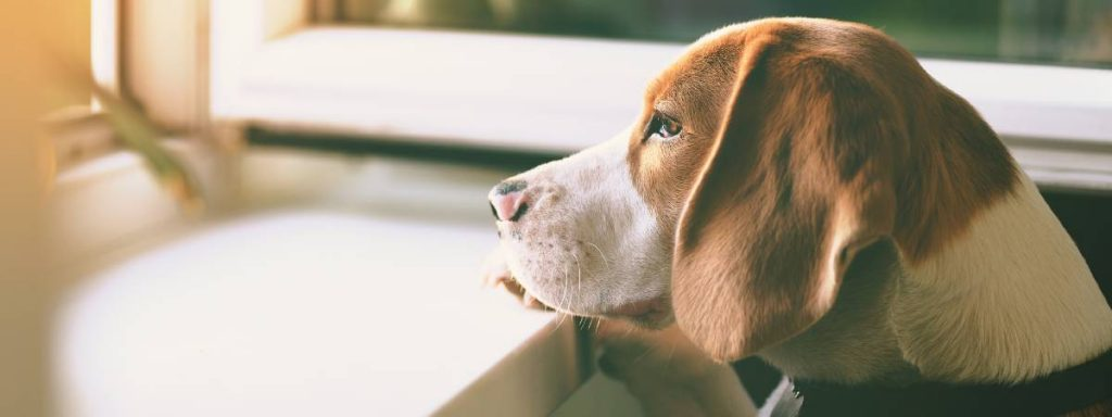 How to care for your dog during the coronavirus 'lockdown'