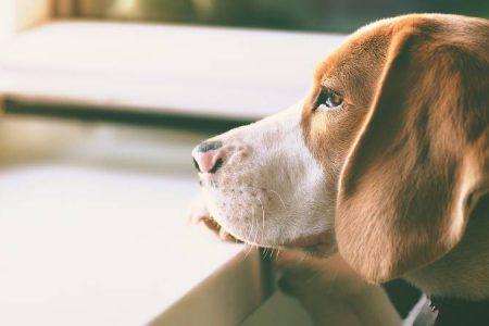 Coronavirus advice for dog owners