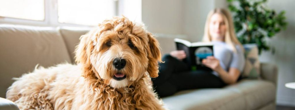 Good books for dog lovers