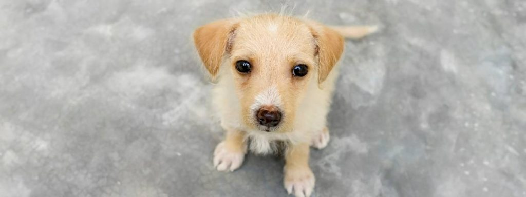 National Pet Month: how you can support pet charities during the coronavirus outbreak