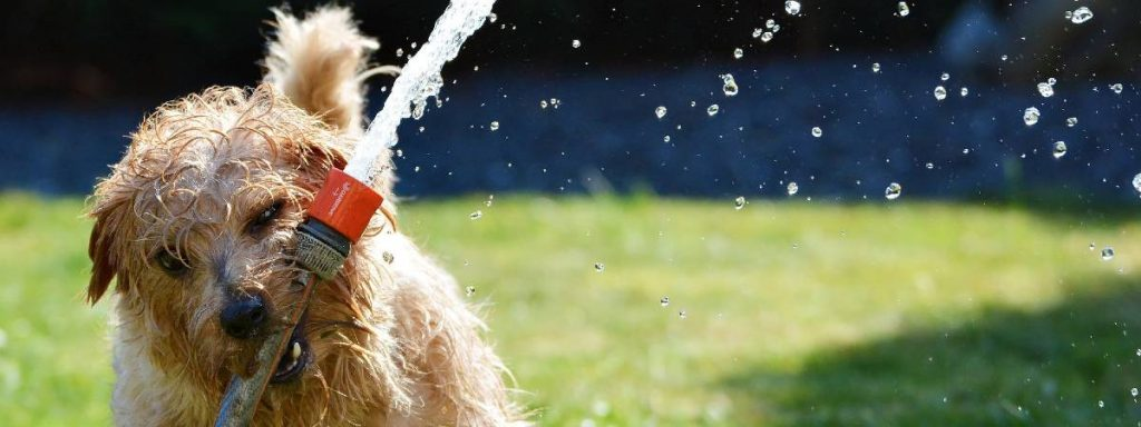 How to keep dogs cool in the summer