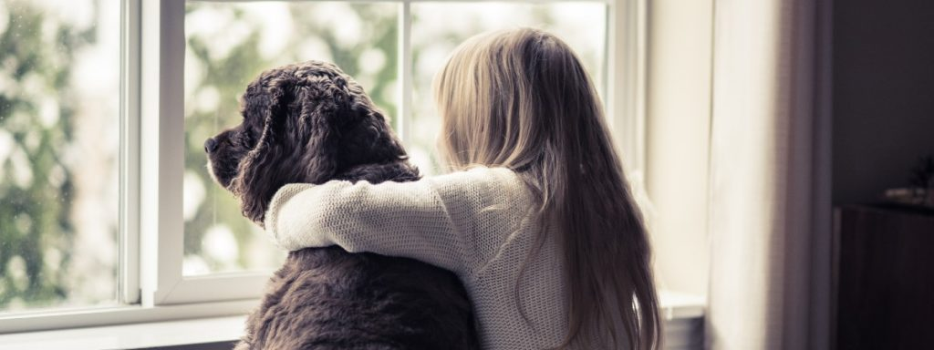 How to prepare your dog for life post-lockdown