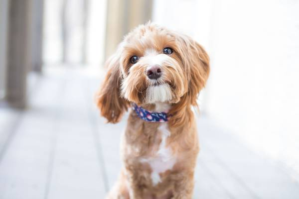 Questions to ask when buying a puppy