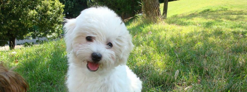Puppy grooming: your puppy's first haircut