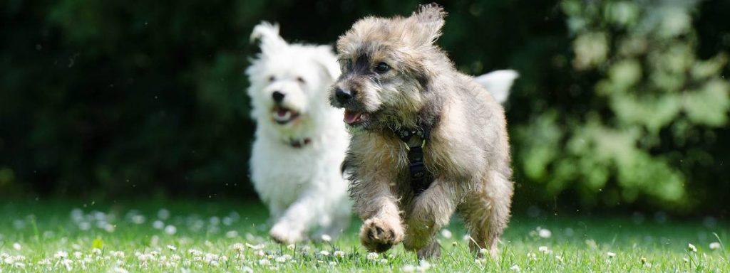 News: Virtual Big Dog Walk to raise money for dog charities set for September