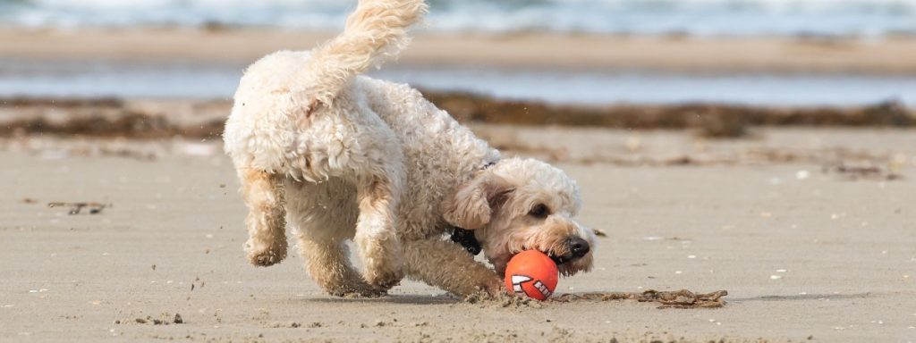 Revealed: The five most dog-friendly destinations in the UK for your 2020 staycation