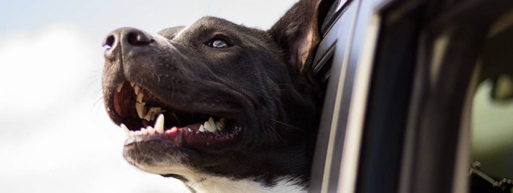 Planning a road trip with your dog?  Here's some walks on motorway routes