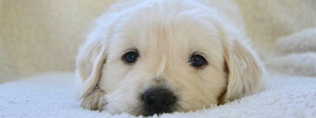 Do puppies sleep a lot? Puppies and sleep