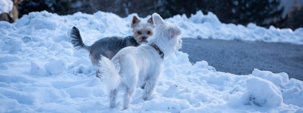 Top tips for walking your dog in the winter